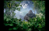 Sky TV (NZ) - Gorillas